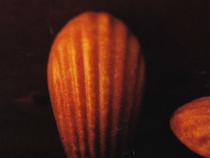 f1s-madeleine
